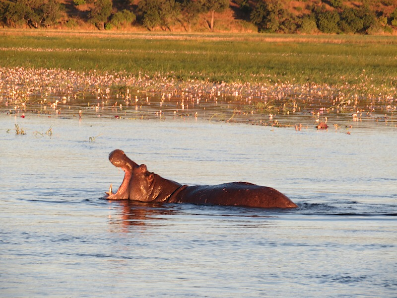 Africa: Chobe River in Botswana