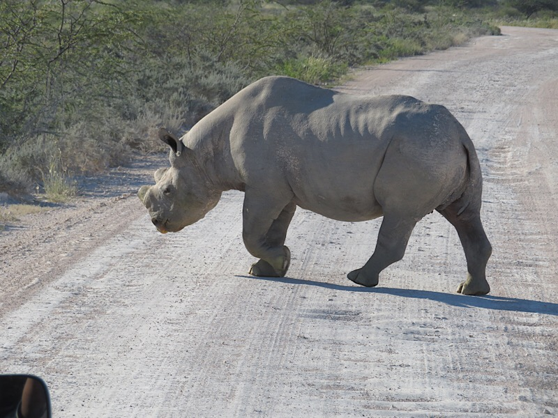 Africa: Rhino in Ethosha