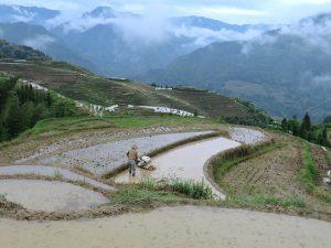Longshen Rice Paddy