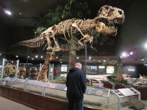 T-Rex In Museum of the Rockies in Montana